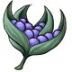 Pinya Berries