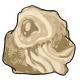 Jellyfish Fossil
